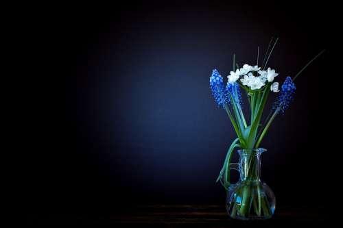 Flowers Vase Glass Leek Flower White Hyacinth