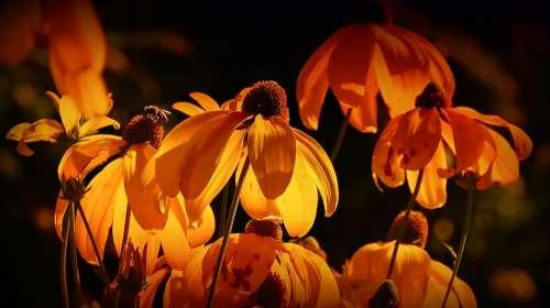 Flowers Orange Orange Petals Orange Blossom Petals