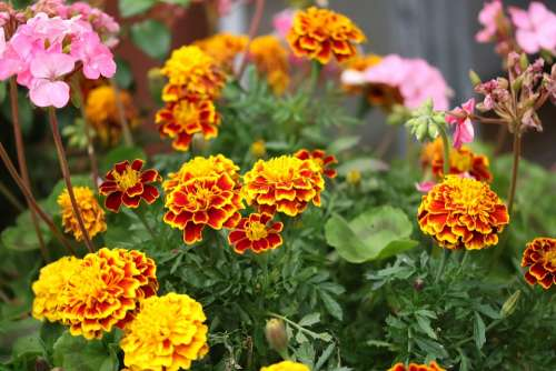 Flowers Nature Spring Colorful Garden