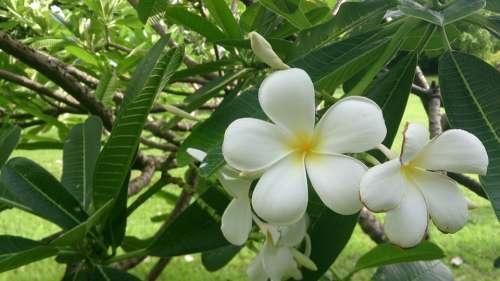 Flowers More Information White Nature Garden