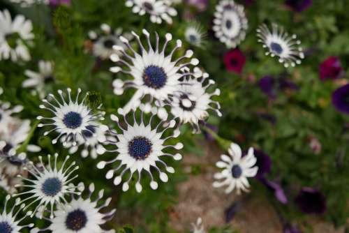 Flowers White Nature A Flower Garden