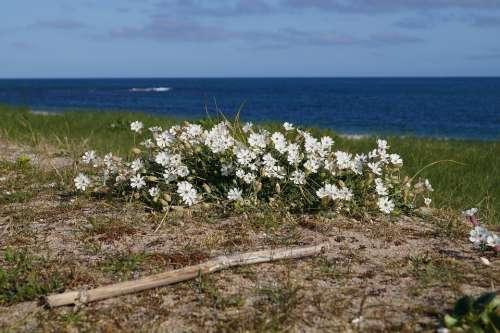 Flowers Beach Sea Sand Ocean Romantic Winter