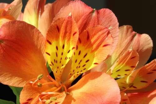 Flowers Beauty Nature Plants Petal Floral Flower