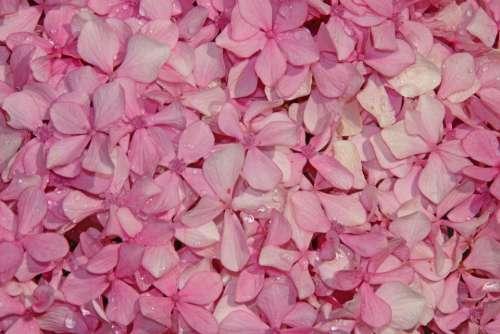 Flowers Sea Of Flowers Pink Beautiful Spring Flora