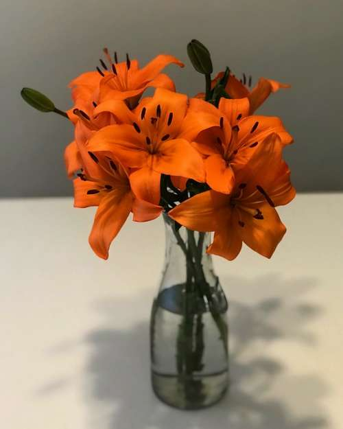 Flowers Vase Decoration Bouquet Colorful Love