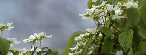 Flowers Nature Blossom Garden Petals