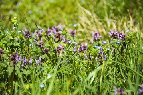 Flowers Purple Background Field Meadow Bokeh Blur