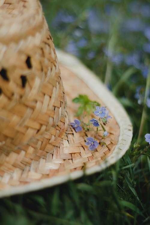 Flowers Grass Meadow Herbs Purple Bloom Summer