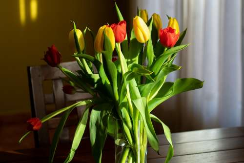Flowers Light Bouquet Tulips Decoration