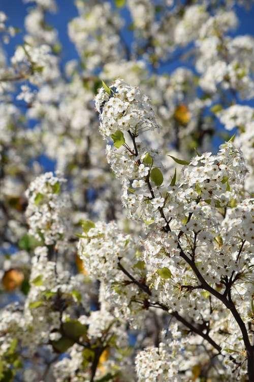 Flowers Spring Tree Nature Blossom Flora