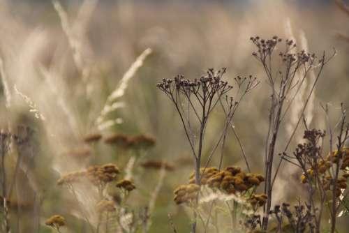 Flowers Grass St Nature Plant Landscape Bloom