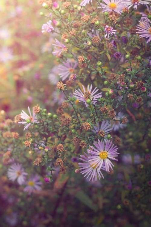 Flowers Summer Nature