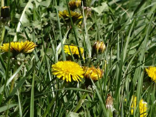 Flowers Landscape Yellow Field Flower Wild Flowers
