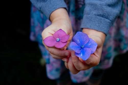 Flowers Hands Holding Blossoms Petals Color