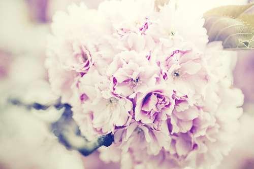 Flowers Bouquet Lilac Bouquet Of Flowers Purple