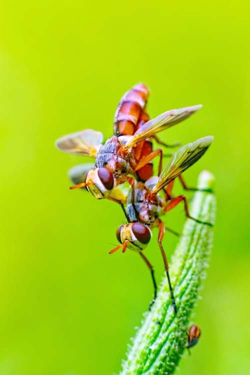 Fly Insects Pair Nature Mating Sex