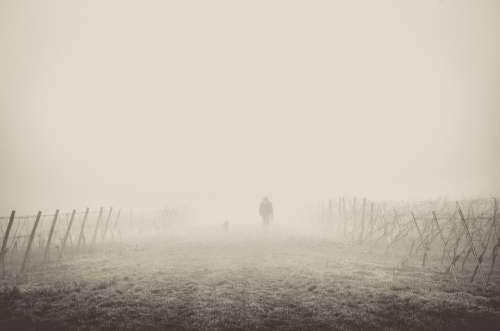Fog Path Hiking Hiker Walking Mist Fences