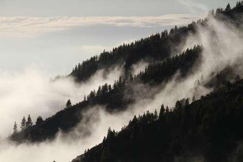 Fog Forest Mist Mysterious Vegetation