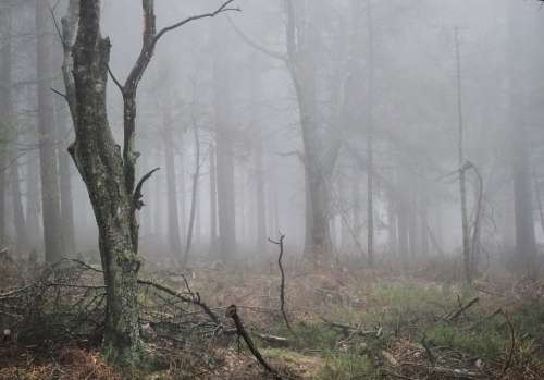 Fog Autumn Forest Nature Plant Atmosphere Mood