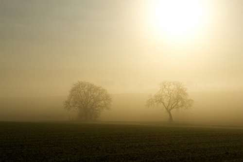 Fog Sun Backlighting Trees Silhouette Mystical