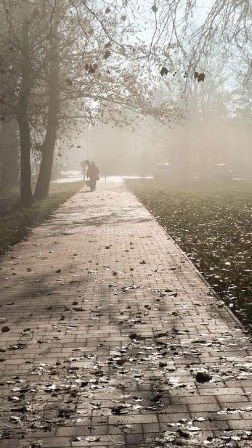 Fog Sunshine Mood Autumn Trees Balatonmáriafürdő