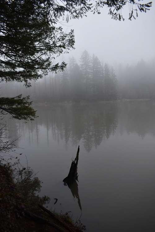 Fog Trees Water Wallpaper Forest Nature Landscape