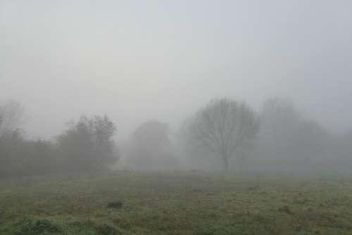 Fog Landscape Trees Nature