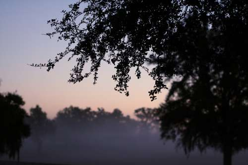 Fog Morning Trees Leaves Early Nature Sunrise