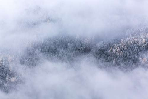 Foggy Frost Trees Landscape Winter Morning Forest