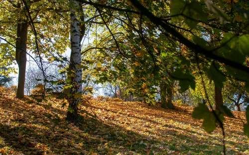 Foliage Autumn Tree Park Nature In The Fall