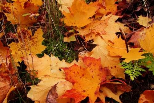 Foliage Autumn Colors Grass