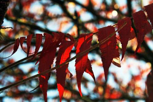 Foliage Tree Branches Red Autumn