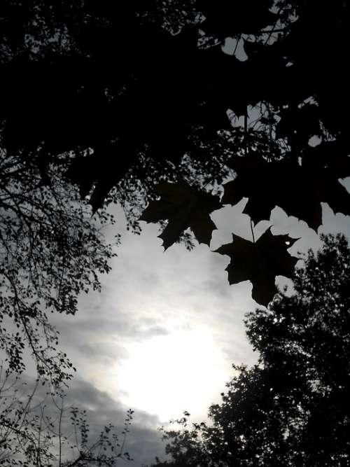 Foliage Trees Black White Heaven
