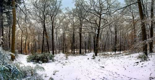 Fontainebleau Forest Snow Nature Trees Wintry