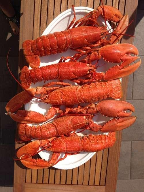 Food Lobster Red