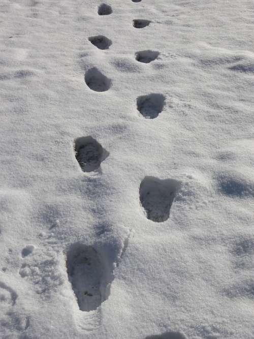 Footprints Snow Prints Snow Winter Tracks