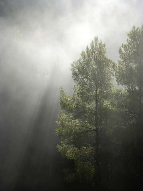 Forest Fog Ray Of Sunshine Backlight Trees Nature