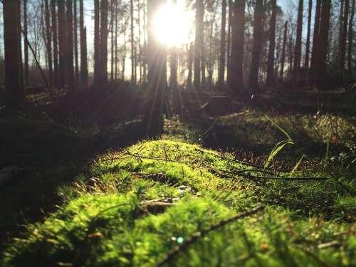 Forest Bush Trees Grass Sunlight Sun Sunrays
