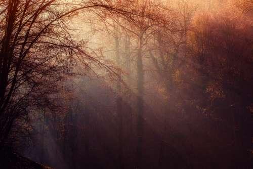 Forest Atmosphere Sunrays Undergrowth Trees Gloomy