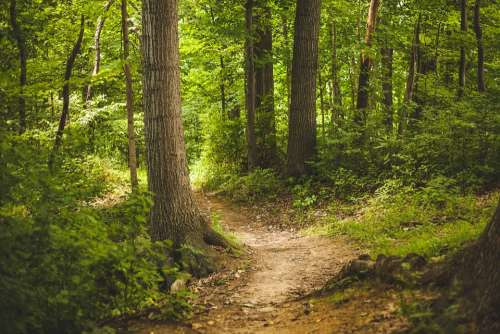 Forest Nature Outdoors Path Trees Woods