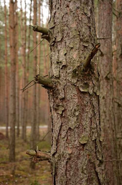 Forest Silence Peace
