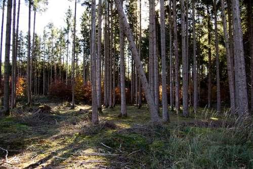 Forest Nature Landscape Autumn Path Secret Tree