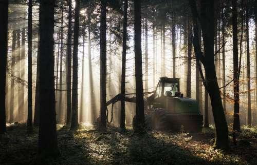 Forest Backlighting Harvester