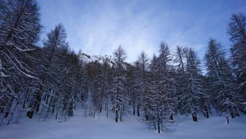 Forest Winter Nature Snow Landscape Trees Cold
