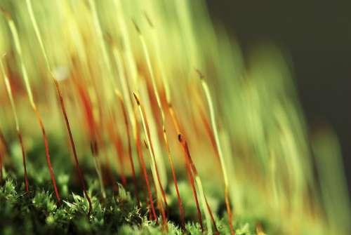 Forest Moss Green Nature Vegetation Plant