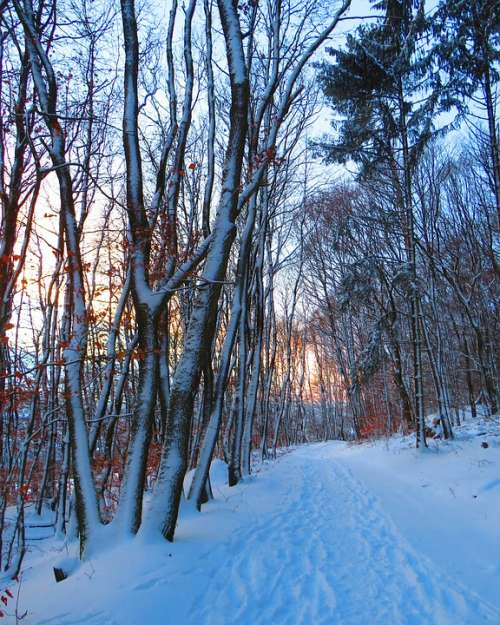 Forest Forest Path Trees Snow Winter Cold Evening