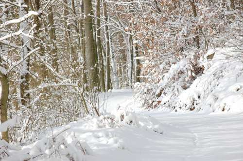 Forest Forest Path Snow Winter Rest Mood Nature
