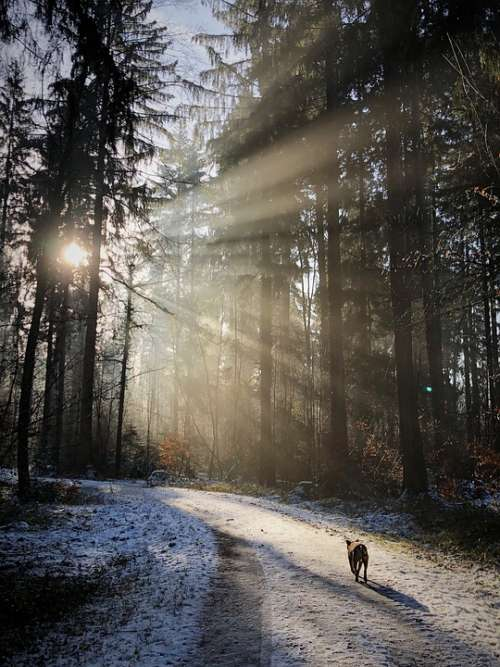 Forest Backlighting Nature Sun Winter Rest Mood