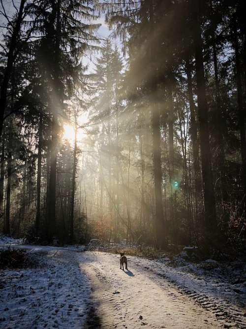 Forest Backlighting Nature Sun Winter Rest Mood
