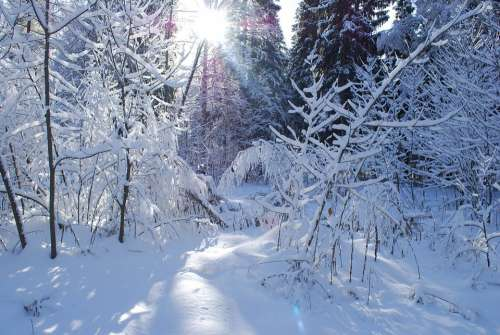 Forest Winter Russia Nature Snow Landscape Trees